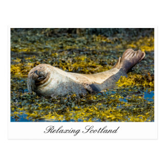 Relaxing seal in Scotland Postcard