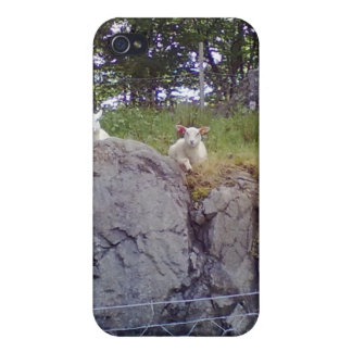 Relaxing Sheep Cover For iPhone 4