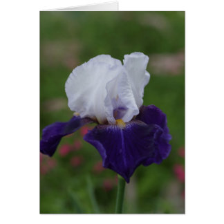 Religious Birthday Cards -- Purple Iris
