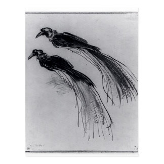 Rembrandt: Two Studies Of A Bird Of Paradise Postcard