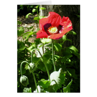 Remembrance Poppy Card
