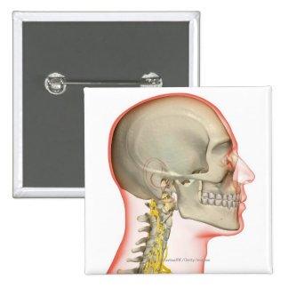 Rendering of the nerves of the neck 15 cm square badge