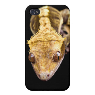 Reptile close up on black background iPhone 4 covers
