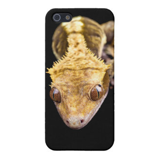 Reptile close up on black background iPhone 5 cases