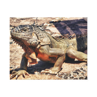 Reptile in Mexico Canvas Print