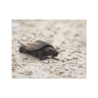 Reptile Turtle Canvas Print