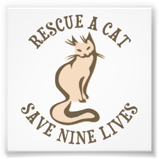 Rescue A Cat Save Nine Lives Photo