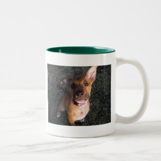 Rescue a shelter dog! mug
