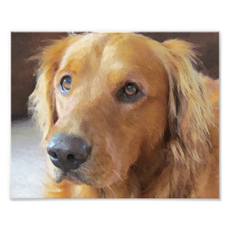 Rescue Dog Photo Print