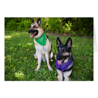 """Rescue Dogs """"Yerik"""" and """"Dylan"""" Card"""