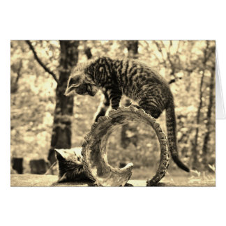 Rescue Kittens Playing on a Log Notecard Greeting Greeting Card