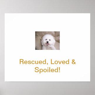 Rescue Me Bichon Frise Poster