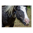 RESCUED HORSE POSTCARD