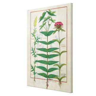 Reseda, Euphorbia and Dianthus Canvas Print