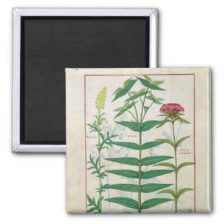 Reseda, Euphorbia and Dianthus Magnet