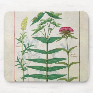 Reseda, Euphorbia and Dianthus Mouse Mat