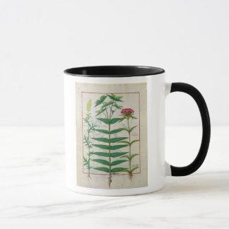 Reseda, Euphorbia and Dianthus Mug