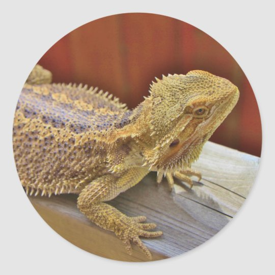 Resting Bearded Dragon 2 Round Sticker
