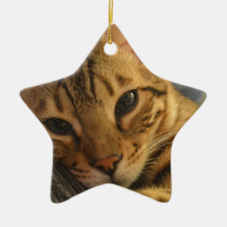 Resting Bengal Ceramic Star Decoration