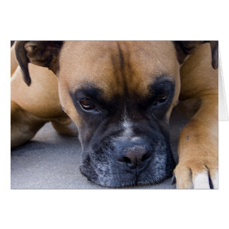 Resting Boxer Dog Greeting Card