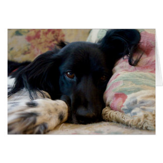 Resting Brittany dog notecard Note Card