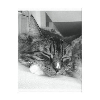 Resting cat in full zen peace by healinglove stretched canvas print