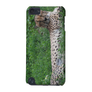 Resting Cheetah iTouch Case iPod Touch (5th Generation) Covers