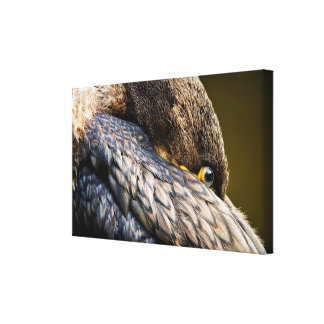 Resting Cormorant Canvas Prints