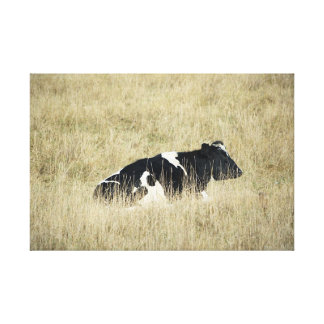 Resting Cow - Canvas