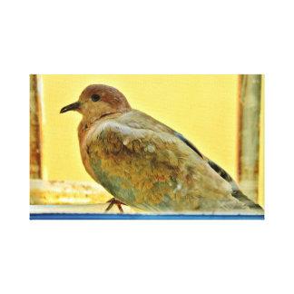 Resting Dove Canvas Print