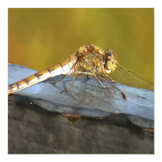 Resting Dragonfly Magnetic Invitations