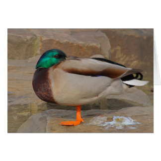 resting duck card