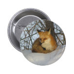 Resting Fox Pinback Button