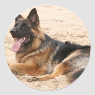 Resting German Shepherd Dog Sticker