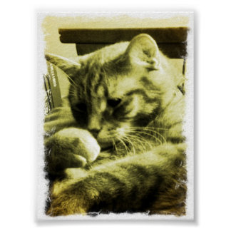 resting kitty poster
