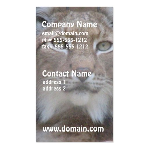 Resting Lynx Business Cards