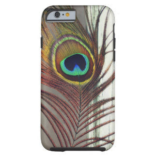 Resting Peacock Feather Tough iPhone 6 Case