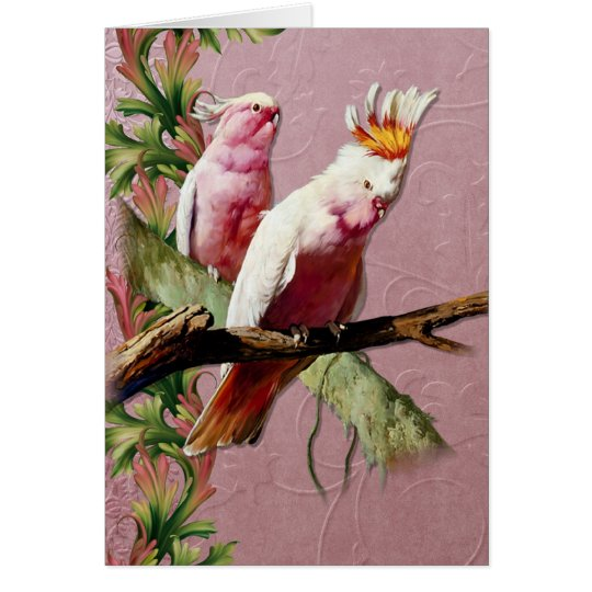 Resting Pink Cockatoos - Customise Card