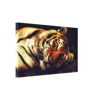 "Resting Tiger 15.47"" x 9.00"" Wrapped Canvas Print"