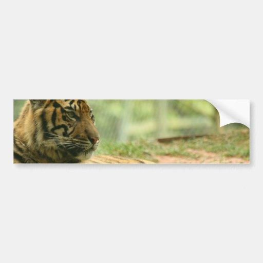 Resting Tiger  Bumper Sticker