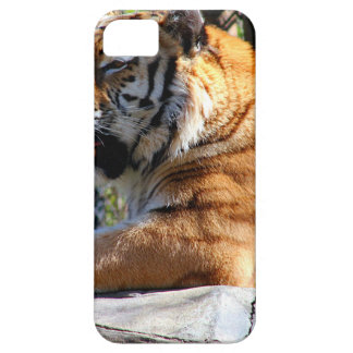 Resting Tiger Case For The iPhone 5