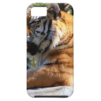 Resting Tiger iPhone 5 Covers