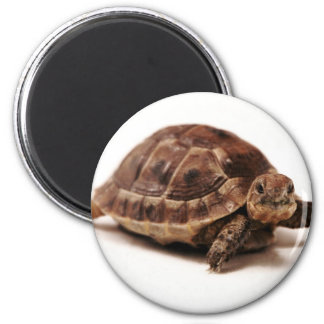 Resting Tortoise 6 Cm Round Magnet