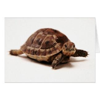 Resting Tortoise Card