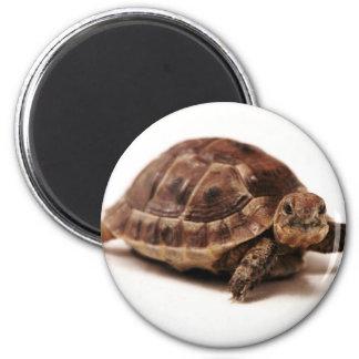 Resting Tortoise Magnet