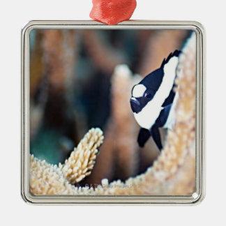 Reticulate dascyllus christmas ornament