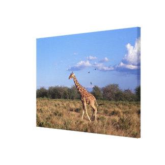 Reticulated Giraffe 2 Canvas Print