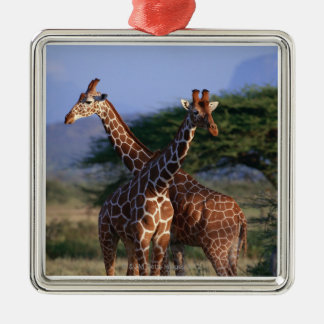 Reticulated Giraffe 2 Christmas Ornament