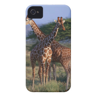 Reticulated Giraffe 2 iPhone 4 Covers