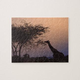 Reticulated Giraffe 2 Jigsaw Puzzle